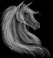 Horse Sketch, Dark Canvas by ladylyzar