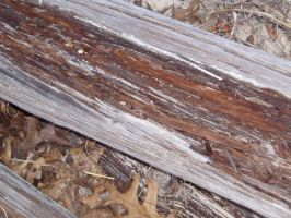 Wood Texture4 by nitch-stock