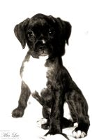 Boxer puppy 02 by MiaLeePhotography