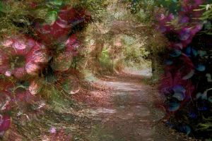 Leaving secret garden by CathleenTarawhiti