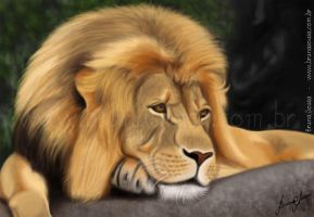 Lion by brunasousa