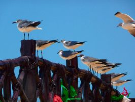 Seagulls 1 by Seigner