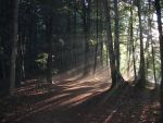 sunlight through the trees by abrazokoan