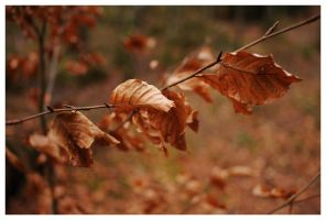 Brown leafes by petteram