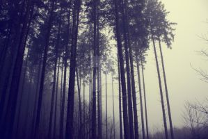 Dark Forest by Deliberation