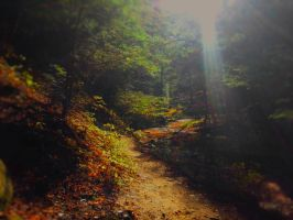 Track In The Woods by Willberr