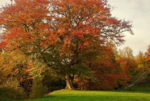 Belvoir Tree in Early Autumn by Gerard1972