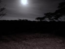 Moon Over Fever Trees by FallenOther
