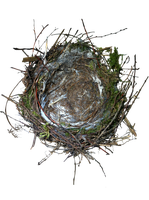 Nest by Siobhan68