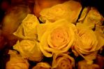 Yellow Happiness Roses by Giggle-Monster