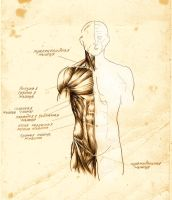 anatomy 5 by DariaGALLERY
