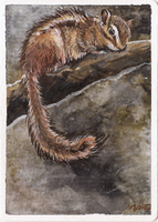aceo chipmunk by kailavmp