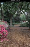 Bok Tower Gardens Stock 3 by Cassy-Blue