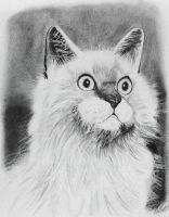 My Kitty in Pencil by toughraid3r37890