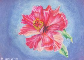 Hibiscus flower by Lozfoai