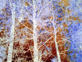 Birches and sky negative by Haizan93