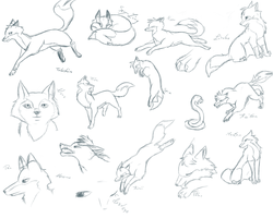 Fox anatomic sketchs free to use by Shizuri-chan