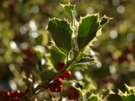 Holly 08 by botanystock