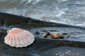 Shell by lpetrusa