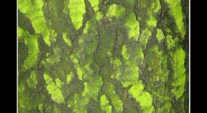 Lurid-Green Bark by Kira-R