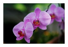 FMG Orchid 5 by badman22