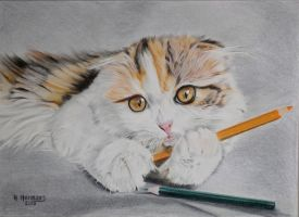 Do' nt mess with my colored pencils ! by HendrikHermans