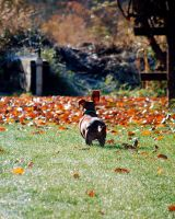 Running Through The Fall Leaves by AngelaLeonetti