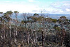 View from Mt Macedon 1 by dpt56