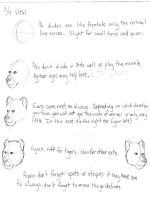 Big Cat Heads Tutorial 2 by AngelTigress03