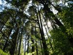tall trees by Sonic840