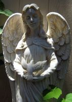 Angel With Dove by Neriah-stock