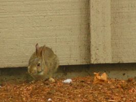 Rabbit Squatting by soluble-hermit