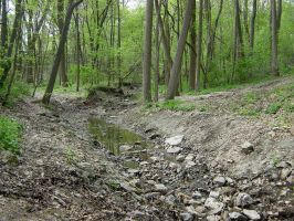Peabody Park Forested Ravine by FantasyStock