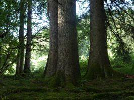 Stock Image - Forest - 03 by Life-For-Sale