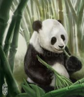 Panda Lunch by sloth79