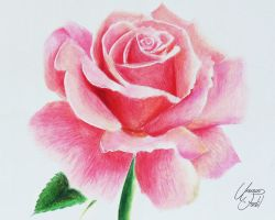 Drawing Flowers 1 - A Rose. by f-a-d-i-l