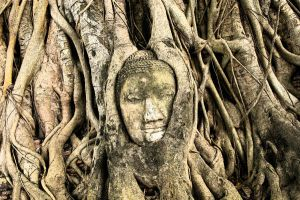 Buddha head in Fig tree by BlackRabbitArtisan