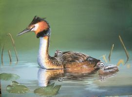 Great Crested Grebe by lindseydearnley