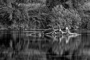 Evening reflections (b/w version) by luka567