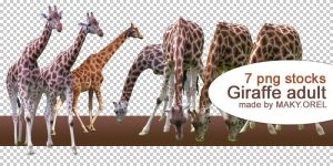 PNG STOCK SET: Giraffe by MAKY-OREL