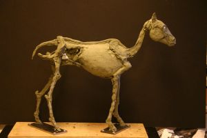 Horse Ecorche - Day 7 by aerie-