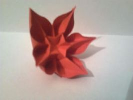 origami carambola by Carmen Sprung by minaret123