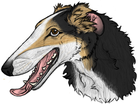 Borzoi Head Finished by RocWulf