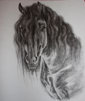 Friesian by Midnight-Sun-Art