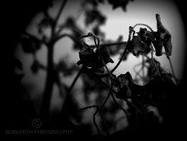 Unrequited by DrowningSignificance