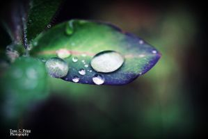 Droplets by Tone1312