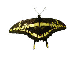 png butterfly mariposa formato png by malkarma