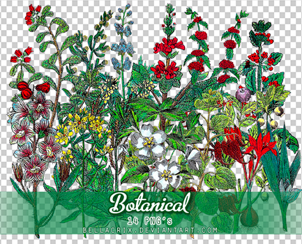 Botanical PNGs by Bellacrix