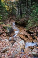White Mountains  Fall Foliage  252 by FairieGoodMother