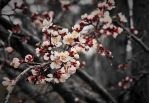 Memory of March by Nour-K